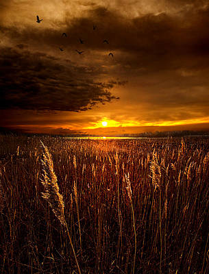 Sweet Dreams Print by Phil Koch