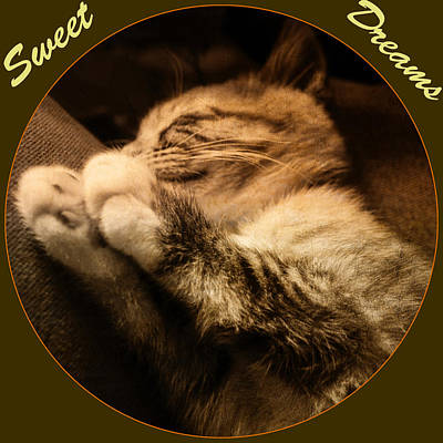 Photograph - Sweet Dreams by Tikvah's Hope