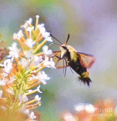 Hummingbird Photograph - Sweet Drink Of Spring by Kerri Farley
