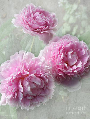 Photograph - Sweet Fragrance Of Peonies by Barbara McMahon