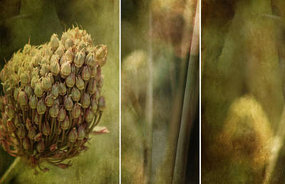 Digital Art - Sweet Garlic by Margaret Hormann Bfa