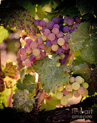 Wine Photograph - Sweet Grapes by Ana V Ramirez