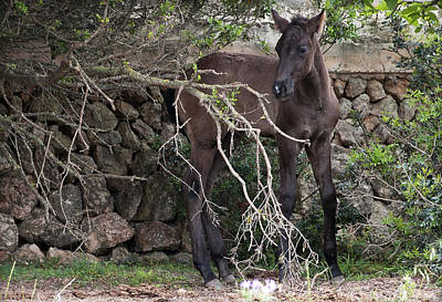 Patriotic Signs - sweet heart - A tender foal wait his beloved mother  by Pedro Cardona Llambias
