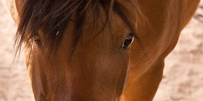 Photograph - Sweet Horse Face by Natalie Rotman Cote