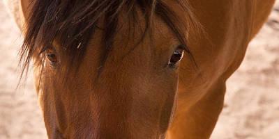 Sweet Horse Face Art Print