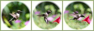 Photograph - Sweet Hummingbird Collage With Green Border by Carol Groenen