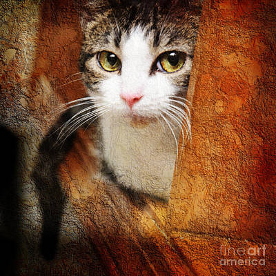 Andee Design Cat Eyes Photograph - Sweet Innocence by Andee Design