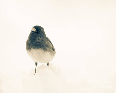 Winter Scene. Winter Landscape. Snow Landscape. Black And White. Birds Photograph - Sweet Junco by Cheryl Baxter