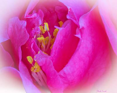 Camellia Photograph - Sweet Kiss by Heidi Smith