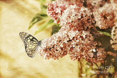 Photograph - Sweet Lilacs by Lois Bryan