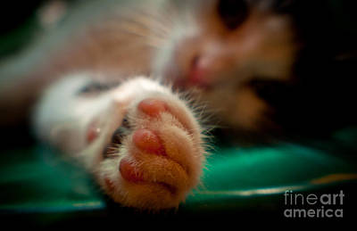 Photograph - Sweet Little Paw by Cheryl Baxter