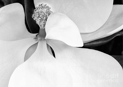 Photograph - Sweet Magnolia Blossom by Sabrina L Ryan