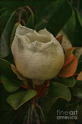 Sweet Magnolia Print by Deborah Benoit