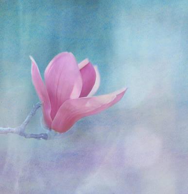 Sweet Magnolia Print by Kim Hojnacki
