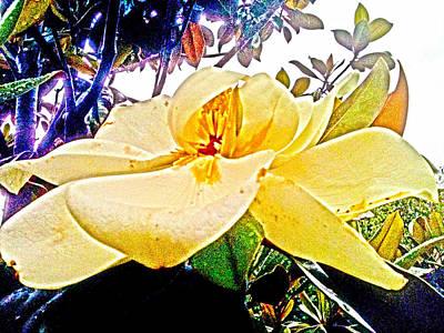 Sweet Magnolia Art Print by Lesa Fine