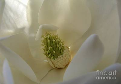 Art Print featuring the photograph Sweet Magnolia by Peggy Hughes