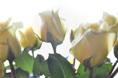 Photograph - Sweet Memories by Tikvah's Hope