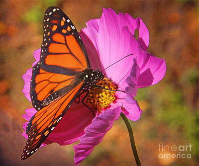 Photograph - Sweet Nectar by Elizabeth Winter