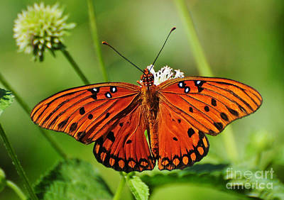 Photograph - Sweet Nectar by Kathy Baccari