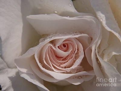 Art Print featuring the photograph Sweet Opening by Agnieszka Ledwon
