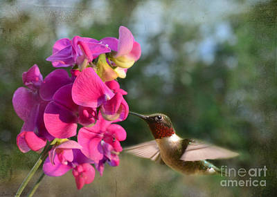 Sweet Pea Hummingbird Art Print by Debbie Portwood
