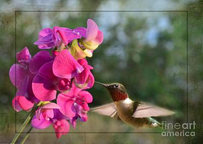 Sweet Pea Hummingbird II Print by Debbie Portwood