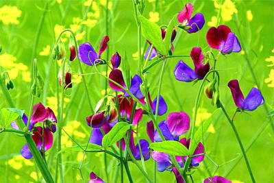Art Print featuring the photograph Sweet Peas by Byron Varvarigos