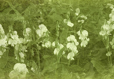 Pea Green Photograph - Sweet Peas by Tammy Apple