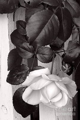 Photograph - Sweet Petals by Avis  Noelle