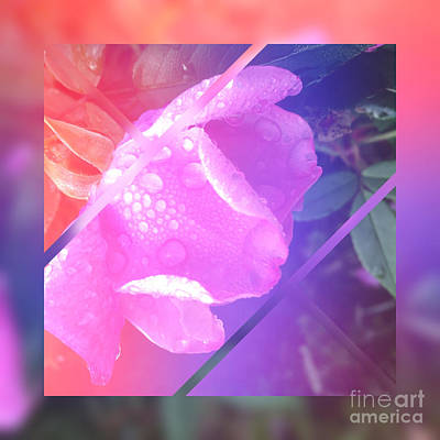 Abstruse Digital Art - Sweet Pink Wild Rose With Dew Drops by Beverly Claire Kaiya