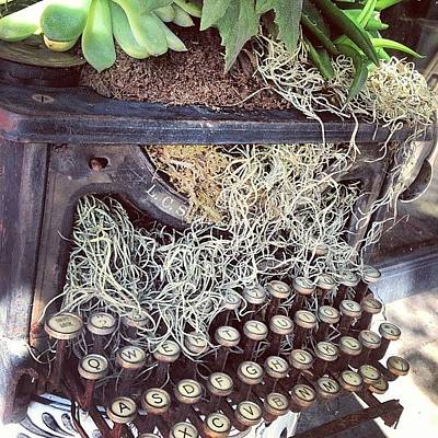 Typewriter Photograph - Sweet Planter by Keith L