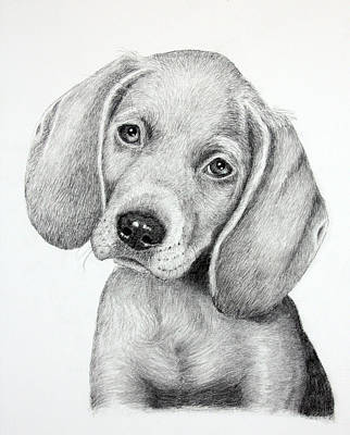 Drawing - Sweet Puppy Love by Lorraine Foster