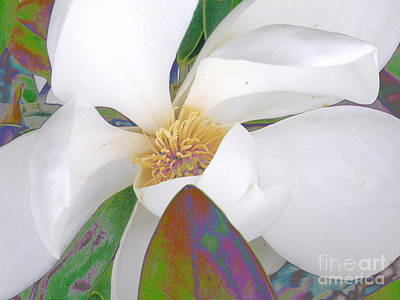 Photograph - Sweet Scents by Diane Miller