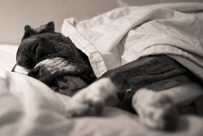 White Boxer Dog Photograph - Sweet Sleeping Boxer by Stephanie McDowell