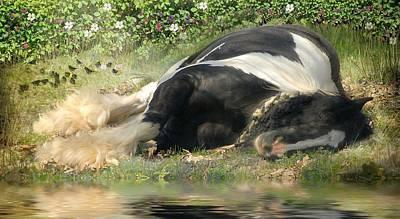 Gypsy Cob Photograph - Sweet Slumber by Fran J Scott