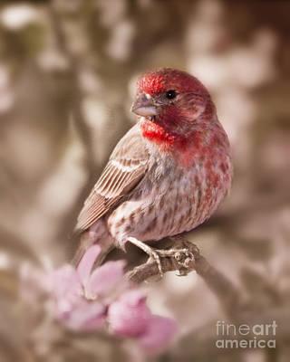 Finch Digital Art - Sweet Songbird by Betty LaRue
