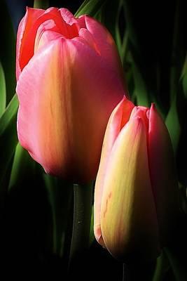 Photograph - Sweet Splendor by Bruce Bley