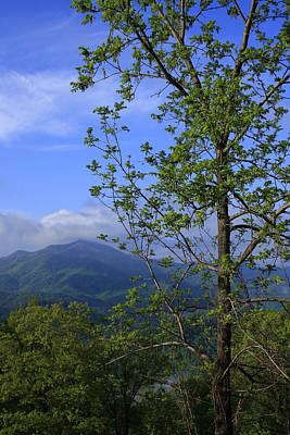 Art Print featuring the photograph Sweet Springtime On The Blue Ridge Parkway Nc by Mountains to the Sea Photo