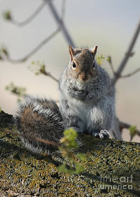 Photograph - Sweet Squirrel by Carol Groenen