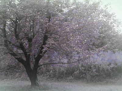 Sadness Photograph - Sweet Summer Blues by The Art Of Marilyn Ridoutt-Greene