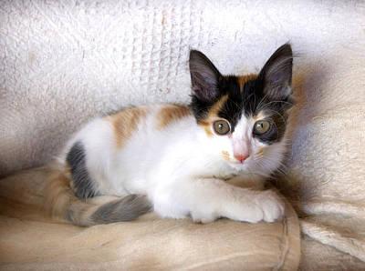 Adorable Digital Art - Sweet The Kitten by Gina Dsgn