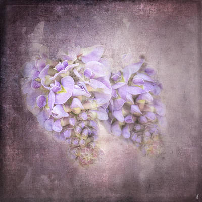 Photograph - Sweet Wisteria by Jai Johnson