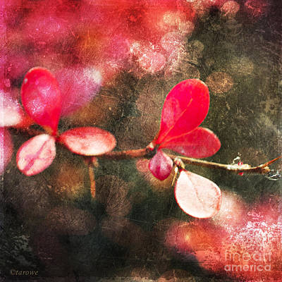 Photograph - Sweetheart Leaf by Terry Rowe