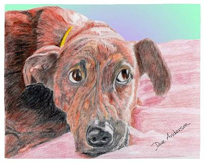 Brindle Drawing - Sweetie - A Former Shelter Star by Dave Anderson