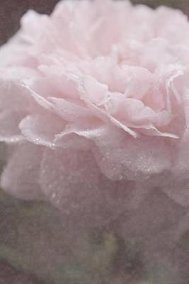 Sweetly Pink Art Print by The Art Of Marilyn Ridoutt-Greene