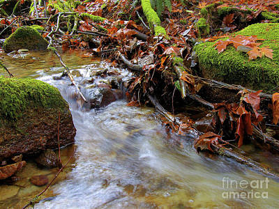 Fallen Leaf On Water Photograph - Swept Away by Sharon Talson