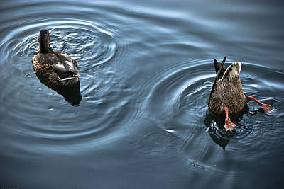 Photograph - Swim And Take The Plunge by Allan Millora