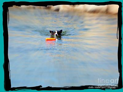 Photograph - Swimmer In The Truckee River by Bobbee Rickard