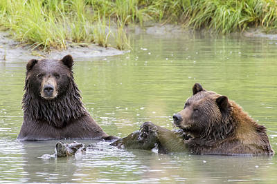 Photograph - Swimming Grizzlies by Saya Studios