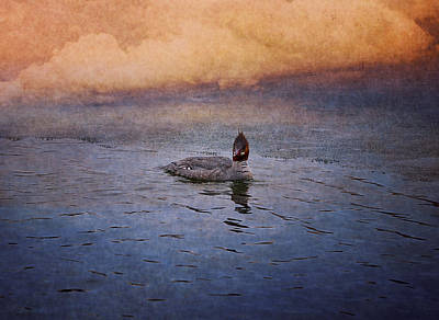 Common Merganser Wall Art - Photograph - Swimming In A Frozen Lake by Maria Angelica Maira
